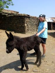 Friedel and a baby donkey