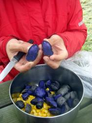 Have you ever seen purple potatoes??