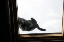 Cat on a skylight, what the... ?!?
