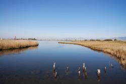 A pretty marsh