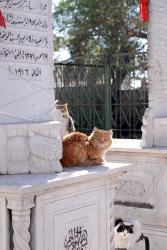 Cats in the sun in Damascus