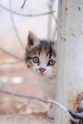 A kitten in a Syrian street