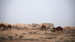Camels wandering around Merv