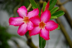 Rainy season flowers