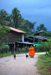 Monks early in the morning in Champasak