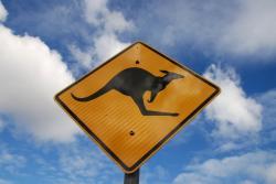 Kangaroos are everywhere in Australia