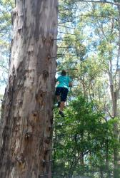 Friedel climbing the Gloucester Tree