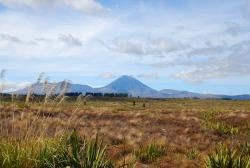 Volcanoes in Tongariro National Park!