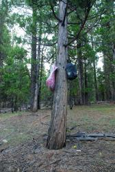 Our food up a tree. We're trying to get our head around bear country. We think it should be higher!