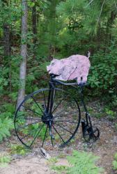 Pig on a Penny Farthing