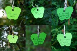 A selection of apples with messages we found hanging from trees