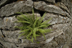 Ferns that caught our eye
