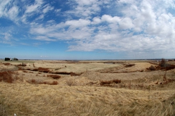 More Marshes