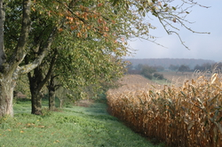 Apple orchards and corn fields
