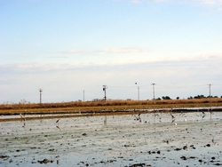 Birds in the rice fields of the Delta d'Ebre