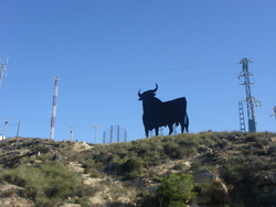 The famous Spanish bull